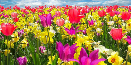 Floriade 2022 – A Holiday Full of Colour